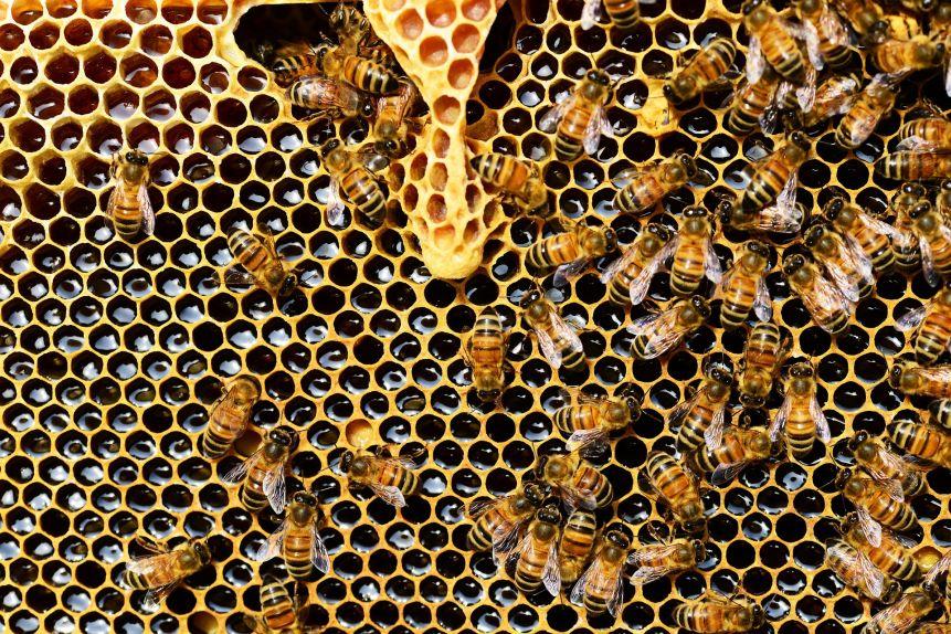 Leben im Bienenstock. Durch Bienenpatenschaft!