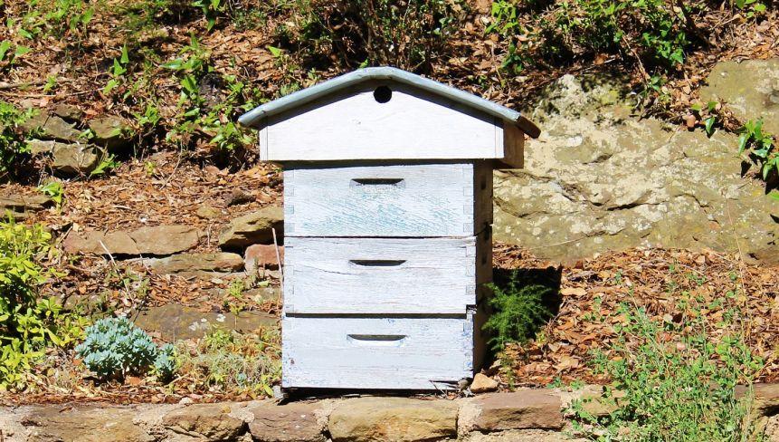 Der Bienenstock, das zu Hause der Bienen gehört durch eine Bienenpatenschaft bald Ihnen.