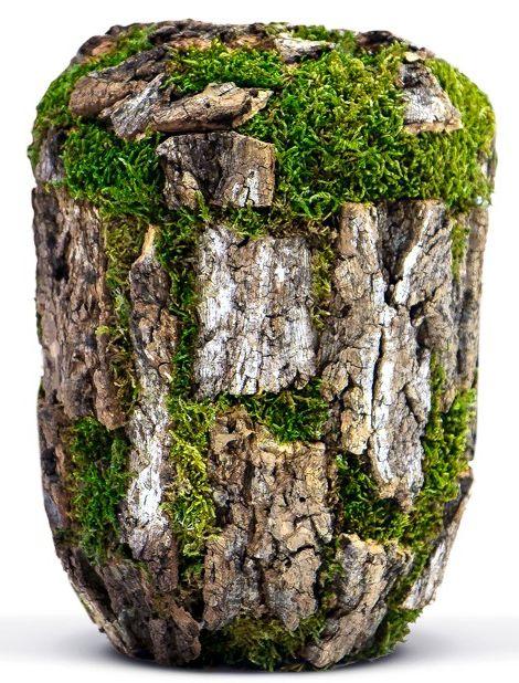 Die Baum-Urne schließt den Lebenskreis. Lebensversicherungen machen es möglich! Sterben